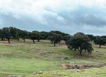 zonas de producción de jamón ibérico